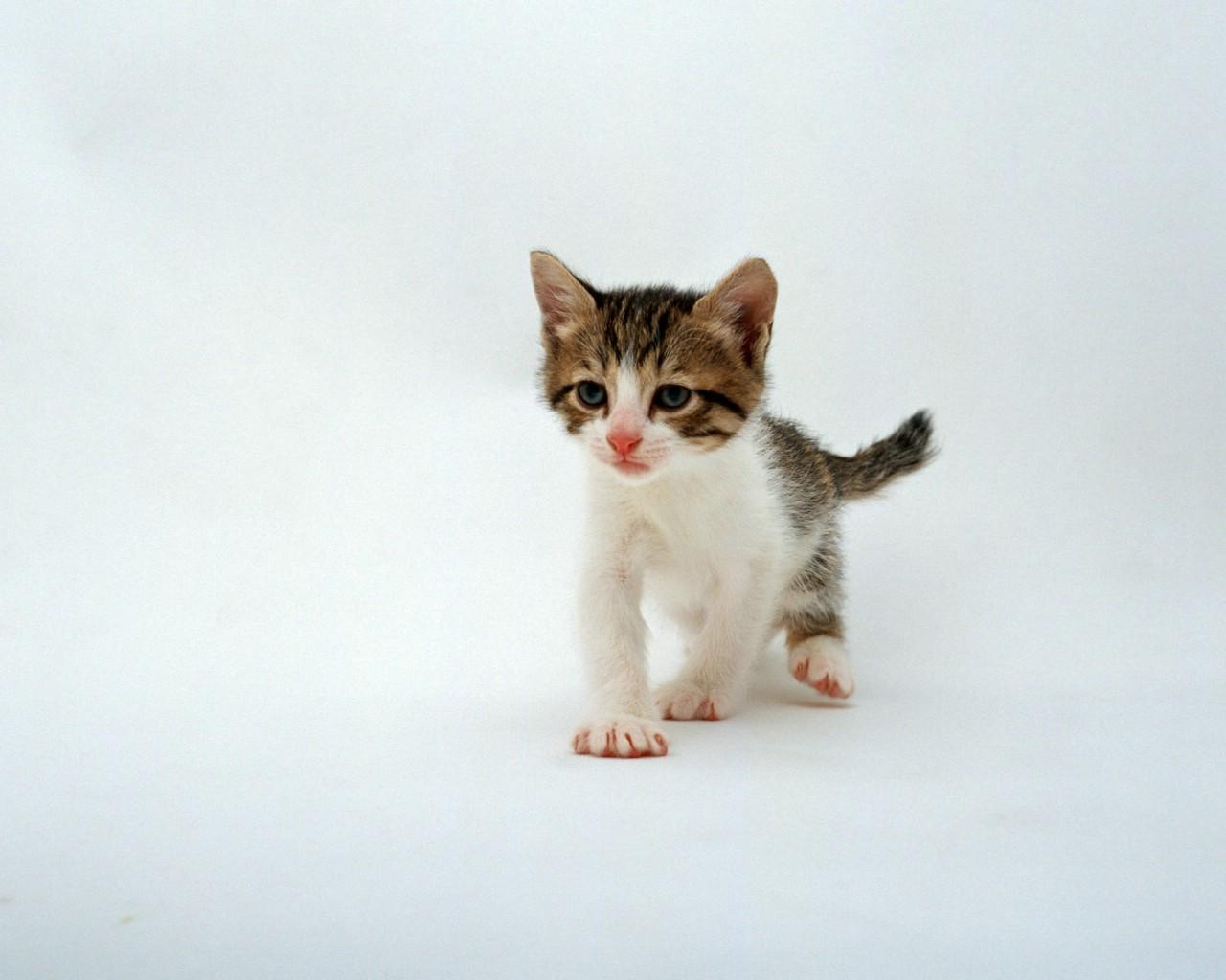 可爱小猫ppt