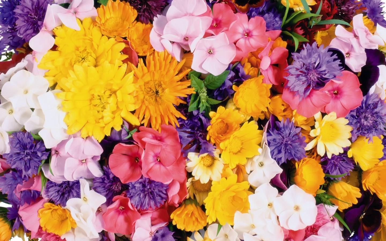 壁纸1440×9001920花朵背景 3 10壁纸 1920花朵背景壁纸图片花卉壁纸花卉图片素材桌面壁纸