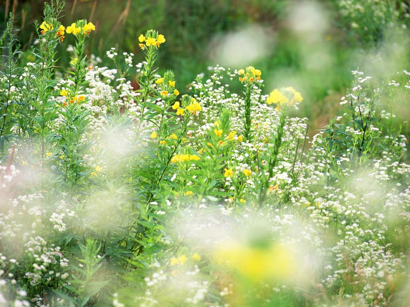 壁纸1400×1050山花烂漫 1 17壁纸 百花盛开 山花烂漫 第一辑壁纸图片花卉壁纸花卉图片素材桌面壁纸
