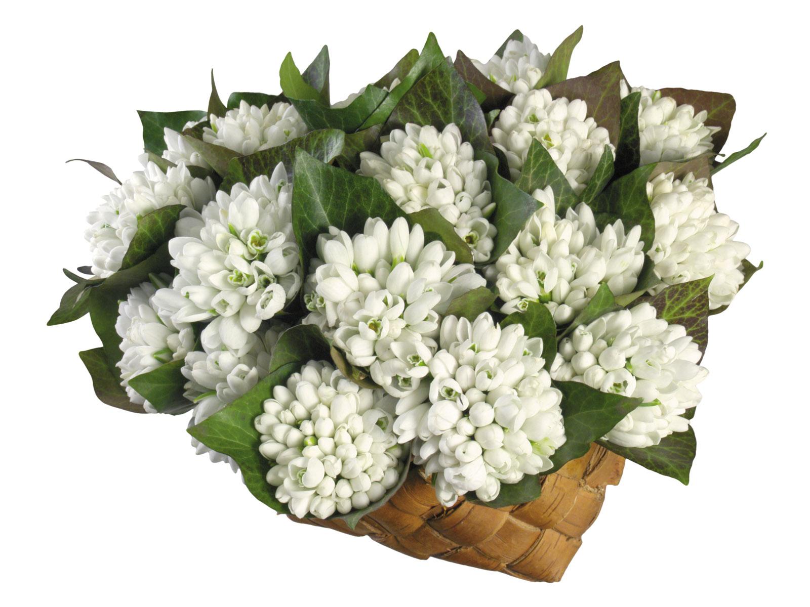 壁纸1600×1200白色花朵 4 18壁纸 白色花朵壁纸图片花卉壁纸花卉图片素材桌面壁纸