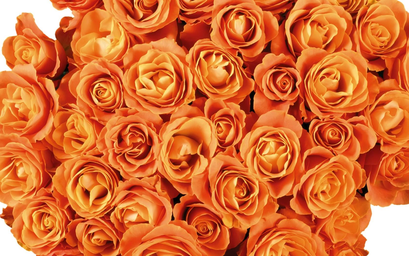 壁纸1680×10501920花朵背景 1 20壁纸 花朵背景 1920花朵背景 第一辑壁纸图片花卉壁纸花卉图片素材桌面壁纸