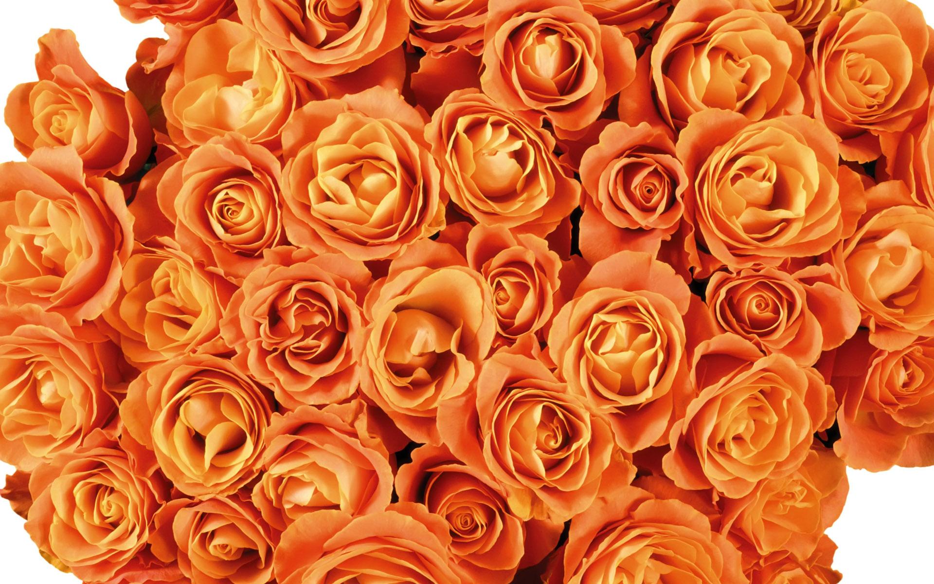 壁纸1920×12001920花朵背景 1 20壁纸 花朵背景 1920花朵背景 第一辑壁纸图片花卉壁纸花卉图片素材桌面壁纸