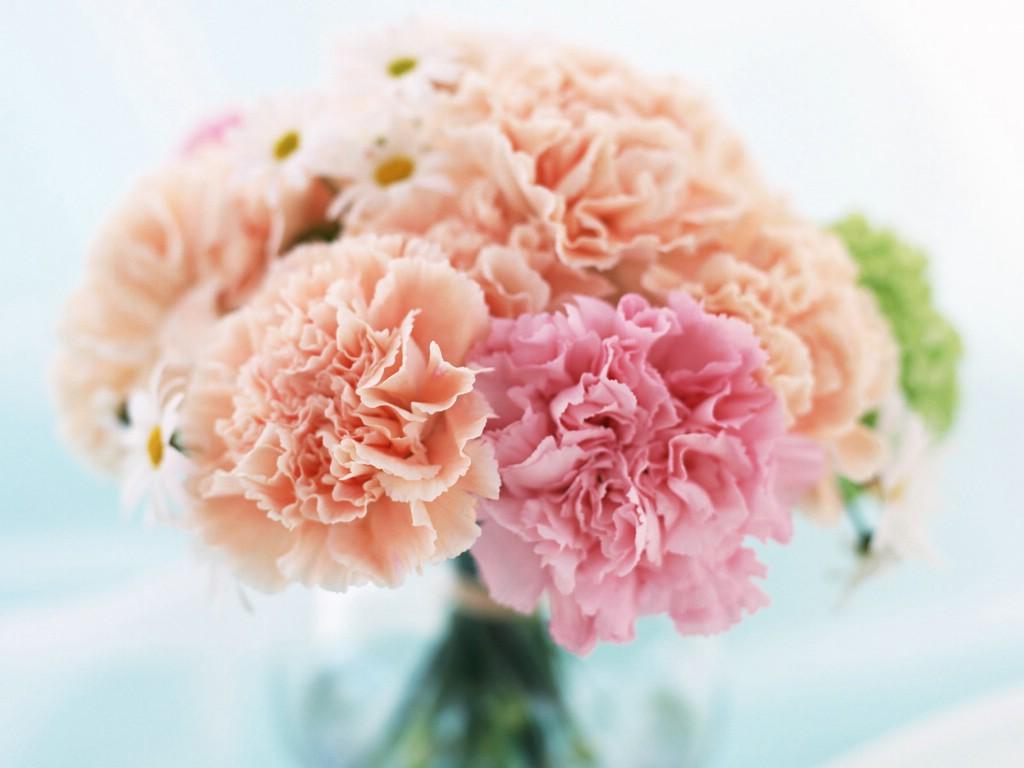 壁纸1024×768母亲节康乃馨 2 20壁纸 母亲节康乃馨壁纸图片花卉壁纸花卉图片素材桌面壁纸