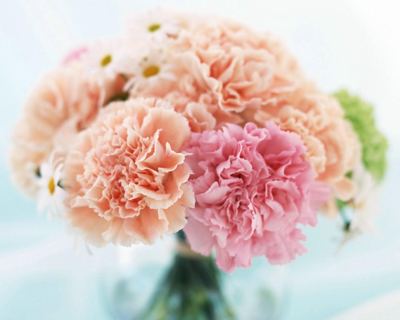 壁纸1280×1024母亲节康乃馨 2 20壁纸 母亲节康乃馨壁纸图片花卉壁纸花卉图片素材桌面壁纸