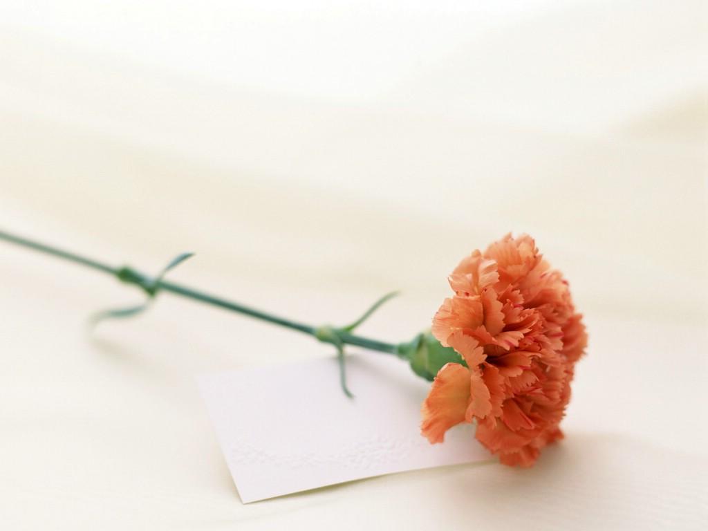 [原创诗歌]寄给住在天堂的母亲 - 枫叶 - 枫叶的博客