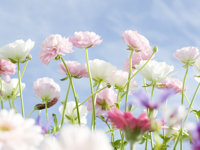 壁纸800×600山花烂漫 3 20壁纸 山花烂漫壁纸图片花卉壁纸花卉图片素材桌面壁纸