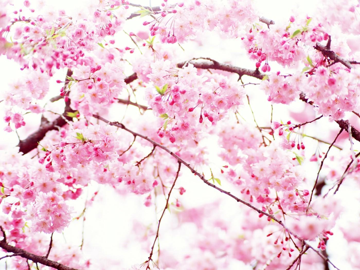 壁纸1400×1050山花烂漫 2 1壁纸 山花烂漫壁纸图片花卉壁纸花卉图片素材桌面壁纸