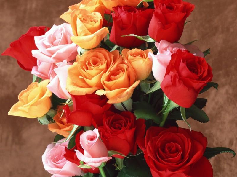 壁纸800×600鲜花特写 12 13壁纸 鲜花特写壁纸图片花卉壁纸花卉图片素材桌面壁纸
