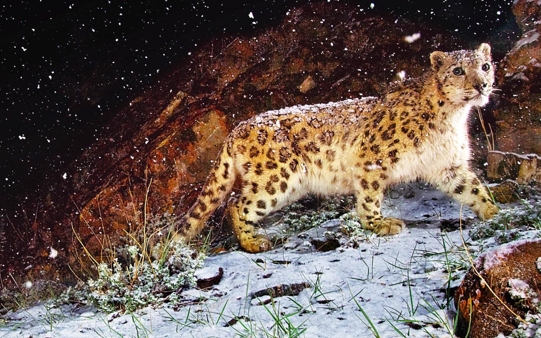 壁纸1440×900Snow Leopard自带 1 13壁纸 Apple Snow Leopard自带 第一辑壁纸图片系统壁纸系统图片素材桌面壁纸